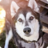 Adopt A Pet :: Xena - Keswick, ON