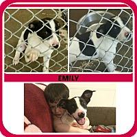 Adopt A Pet :: EMILY - Malvern, AR