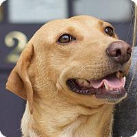 Adopt A Pet :: Mazie - Marietta, GA