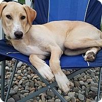 Adopt A Pet :: Emerson - New Oxford, PA