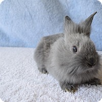 Adopt A Pet :: Bluebell - Fountain Valley, CA