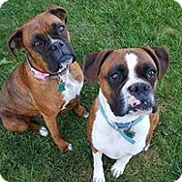 Adopt A Pet :: JOSE - Boise, ID