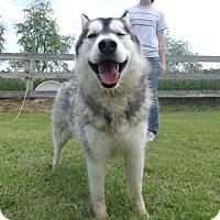 Adopt A Pet :: Baron - Harvard, IL