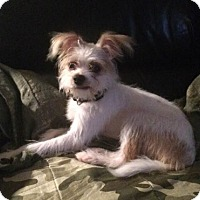 Adopt A Pet :: Milo - West Allis, WI