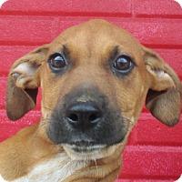 Adopt A Pet :: Christian - Reeds Spring, MO