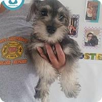 Adopt A Pet :: Junior - Kimberton, PA