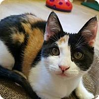 Adopt A Pet :: Dillie - Waxhaw, NC