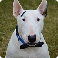 Adopt A Pet :: Tucker - Aubrey, TX