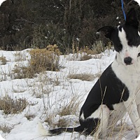 Adopt A Pet :: Bella - Ridgway, CO