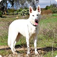 Adopt A Pet :: Lagertha - San Diego, CA