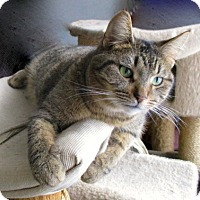 Domestic Shorthair Cat for adoption in detroit, Michigan - Happy New Year