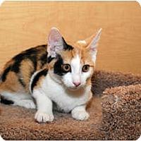 Adopt A Pet :: Maddie - Farmingdale, NY