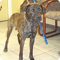 Adopt A Pet :: Haley - Crawfordville, FL