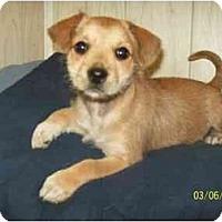 Adopt A Pet :: 'Rella - Wakefield, RI