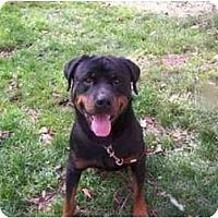 Adopt A Pet :: Hudson - Cuddebackville, NY