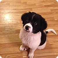 Adopt A Pet :: Boyd - Marietta, GA