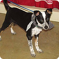 Adopt A Pet :: Preston - North Olmsted, OH
