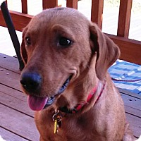 Adopt A Pet :: Dory - Evergreen, CO