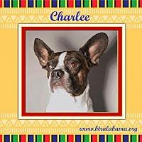 Adopt A Pet :: Charlee - Alabaster, AL