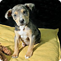 Adopt A Pet :: Marty - Lufkin, TX