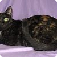 Adopt A Pet :: Ginny - Powell, OH
