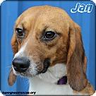 Adopt A Pet :: Jan Brady