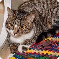 Adopt A Pet :: Skye - Ashland, MA