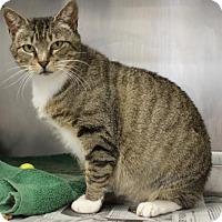 Adopt A Pet :: C-63108 Lacy - Westampton, NJ