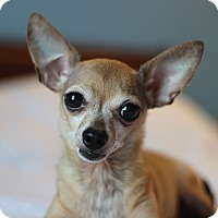 Adopt A Pet :: Pixie - Romeoville, IL