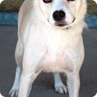 Adopt A Pet :: Mesa - Gilbert, AZ