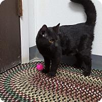 Adopt A Pet :: Navi - Keokuk, IA