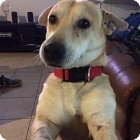 Adopt A Pet :: Ryder - San Antonio, TX