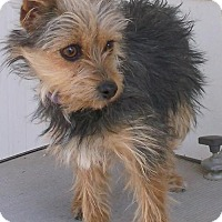Adopt A Pet :: Nixie - Birch Tree, MO