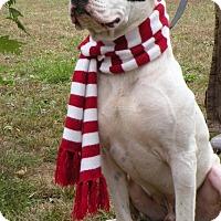 Adopt A Pet :: Guthrie - Franklin, TN