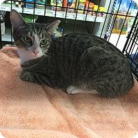 Adopt A Pet :: Trina - Gilbert, AZ