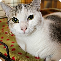 Adopt A Pet :: Angel - Jefferson, NC