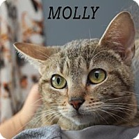 Adopt A Pet :: Molly - Edwardsville, IL