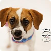 Adopt A Pet :: Sassy - Aqua Dulce, CA