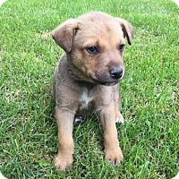 Adopt A Pet :: Lobo - Saskatoon, SK