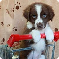 Adopt A Pet :: Mackay - Foster, RI