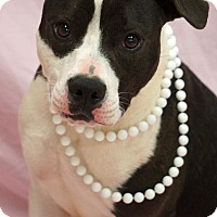 Adopt A Pet :: Miley - Newnan City, GA