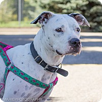 Adopt A Pet :: Cricket - Grand Rapids, MI