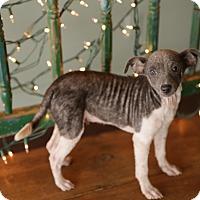 Adopt A Pet :: Smiley - San Antonio, TX