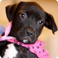 Adopt A Pet :: Rosie - West Grove, PA