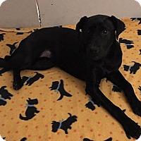 Adopt A Pet :: Harper - Kaufman, TX