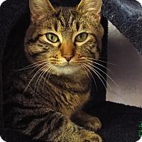 Adopt A Pet :: Allie - Grants Pass, OR