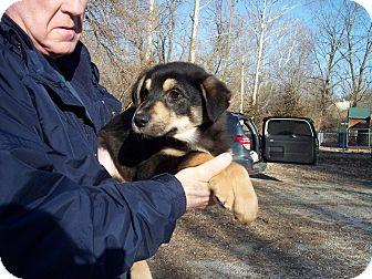 German Shepherd Dog Mix Puppy for adoption in Germantown, Maryland - Heath