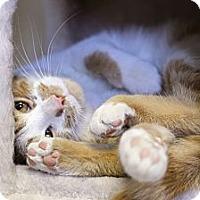 Adopt A Pet :: Charles Zingiber - Chicago, IL