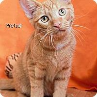 Adopt A Pet :: Pretzel - St Louis, MO