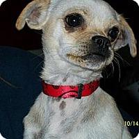 Adopt A Pet :: Ruby - Winchester, CA